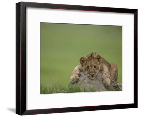 African Lion Cub, Panthera Leo, Lying across a Mound of Soil-Beverly Joubert-Framed Art Print