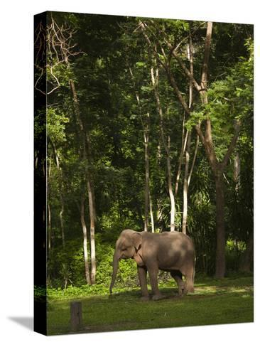 An Asian Elephant, Elephas Maximus, Standing in a Wooded Setting-Karen Kasmauski-Stretched Canvas Print