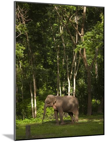 An Asian Elephant, Elephas Maximus, Standing in a Wooded Setting-Karen Kasmauski-Mounted Photographic Print