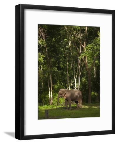 An Asian Elephant, Elephas Maximus, Standing in a Wooded Setting-Karen Kasmauski-Framed Art Print