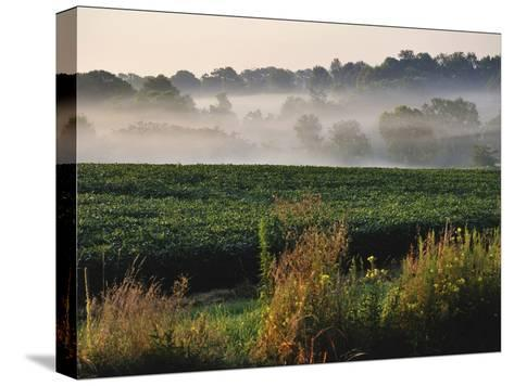 Mist Hangs over a Field of Soybeans Along Historic Maple Grove Road-Steve Raymer-Stretched Canvas Print