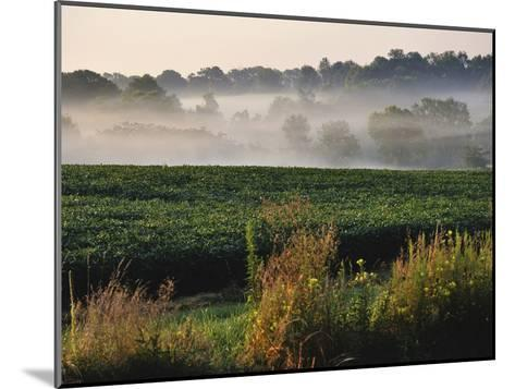Mist Hangs over a Field of Soybeans Along Historic Maple Grove Road-Steve Raymer-Mounted Photographic Print