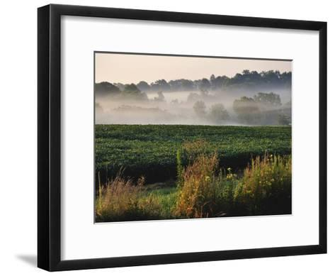 Mist Hangs over a Field of Soybeans Along Historic Maple Grove Road-Steve Raymer-Framed Art Print