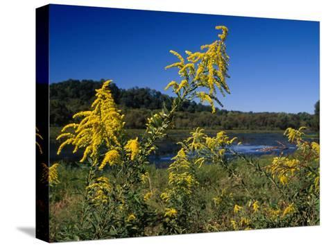 Scenic View of Goldenrod Flowers and Waterways-Raymond Gehman-Stretched Canvas Print
