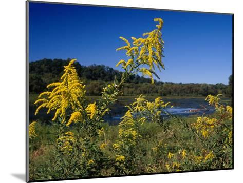 Scenic View of Goldenrod Flowers and Waterways-Raymond Gehman-Mounted Photographic Print