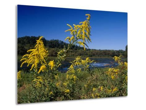 Scenic View of Goldenrod Flowers and Waterways-Raymond Gehman-Metal Print