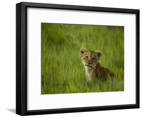 African Lion Cub, Panthera Leo, Portrait in Lush Grass-Beverly Joubert-Framed Art Print
