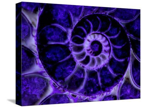 Upper Early Cretaceous Ammonite Fossil under Ultraviolet Light-John Cancalosi-Stretched Canvas Print