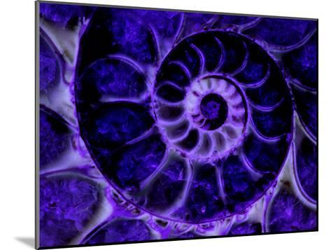 Upper Early Cretaceous Ammonite Fossil under Ultraviolet Light-John Cancalosi-Mounted Photographic Print
