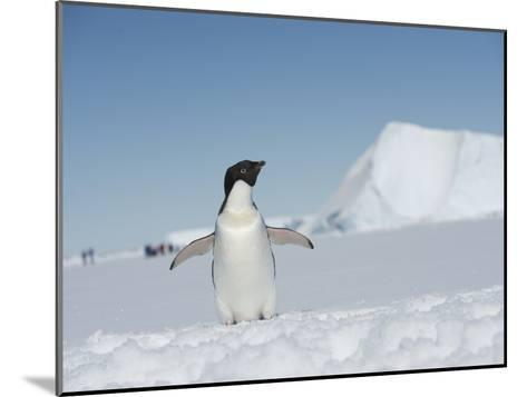 An Adelie Penguin, Pygoscelis Adeliae, on Fast Ice in the Weddell Sea-Keenpress-Mounted Photographic Print