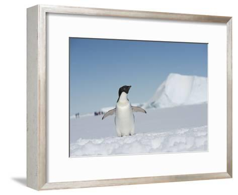 An Adelie Penguin, Pygoscelis Adeliae, on Fast Ice in the Weddell Sea-Keenpress-Framed Art Print