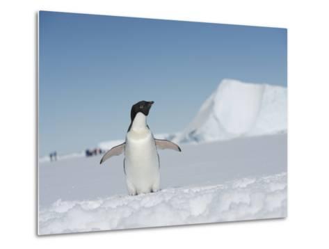 An Adelie Penguin, Pygoscelis Adeliae, on Fast Ice in the Weddell Sea-Keenpress-Metal Print