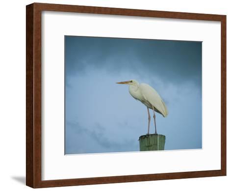 An Egret on a Pier in Key Largo, Florida-Karen Kasmauski-Framed Art Print