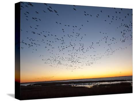 Dawn over the Atlantic Ocean-Karen Kasmauski-Stretched Canvas Print