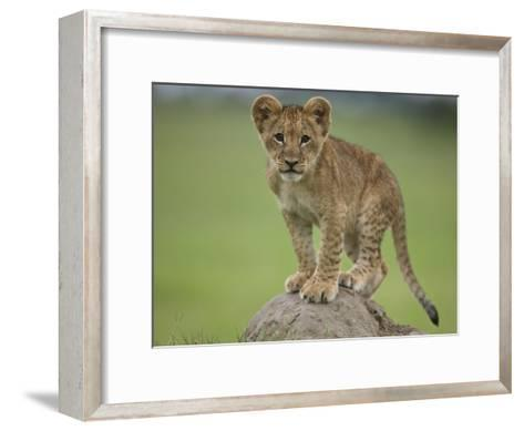 African Lion Cub, Panthera Leo, Standing on a Mound of Soil-Beverly Joubert-Framed Art Print