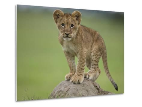 African Lion Cub, Panthera Leo, Standing on a Mound of Soil-Beverly Joubert-Metal Print