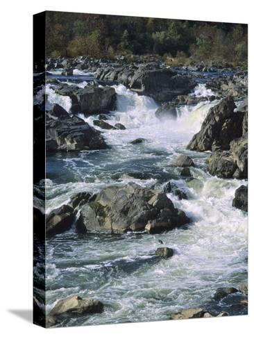 A Great Blue Heron Fishing from the Rocks at Great Falls-Bates Littlehales-Stretched Canvas Print