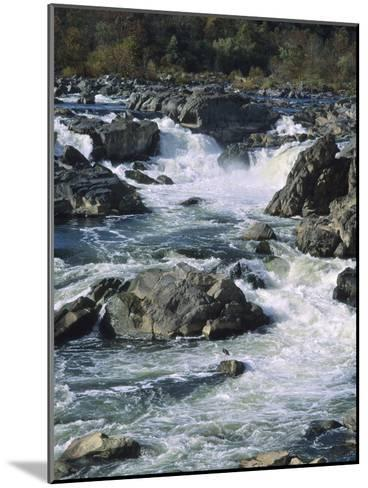 A Great Blue Heron Fishing from the Rocks at Great Falls-Bates Littlehales-Mounted Photographic Print