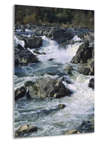 A Great Blue Heron Fishing from the Rocks at Great Falls-Bates Littlehales-Metal Print