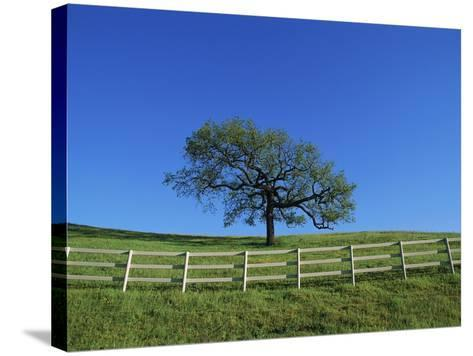 Tree and Fence in Pasture-Craig Aurness-Stretched Canvas Print