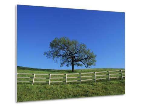Tree and Fence in Pasture-Craig Aurness-Metal Print