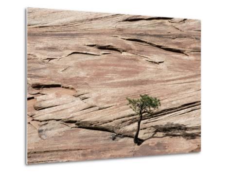 Lone Tree Growing in Rock Formation--Metal Print