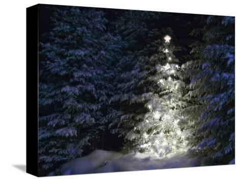 Illuminated Christmas Tree in Snow-Larry Williams-Stretched Canvas Print