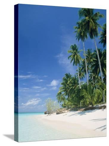 Beach with palms and clear sea, Malaysia, Mabul Island-Sergio Pitamitz-Stretched Canvas Print