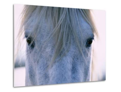 Camargue Horse-Frank Lukasseck-Metal Print