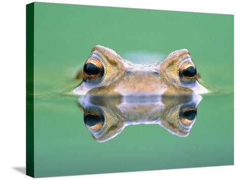 Frog in the water-Herbert Kehrer-Stretched Canvas Print