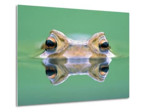 Frog in the water-Herbert Kehrer-Metal Print