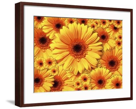 Sun flowers-Matthias Kulka-Framed Art Print