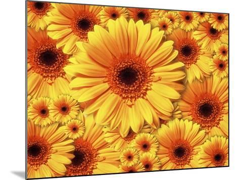 Sun flowers-Matthias Kulka-Mounted Giclee Print