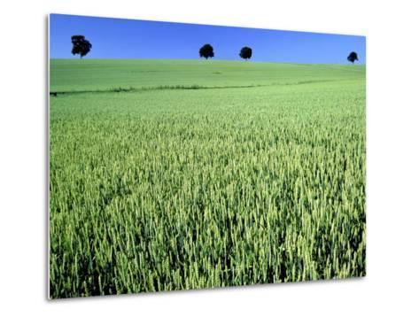 Wheat field-Frank Krahmer-Metal Print