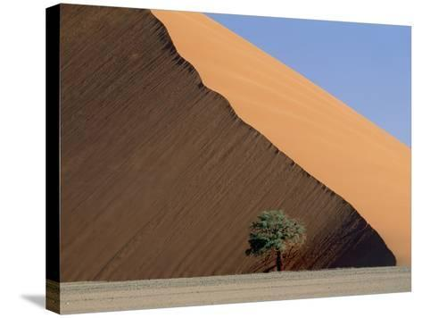 Acacia at the hillside of a dune in Namib Naukluft Park-Frank Lukasseck-Stretched Canvas Print
