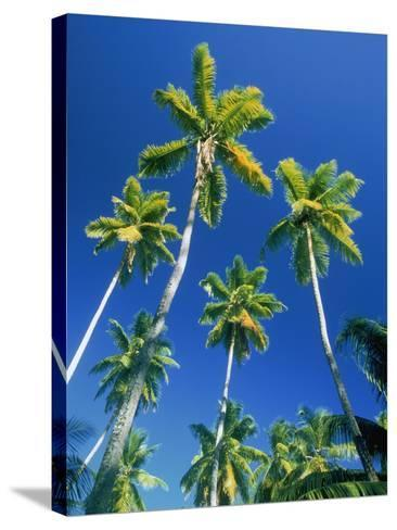 Palm trees, Seychelles, Africa-Frank Krahmer-Stretched Canvas Print