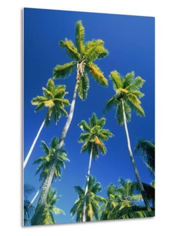 Palm trees, Seychelles, Africa-Frank Krahmer-Metal Print