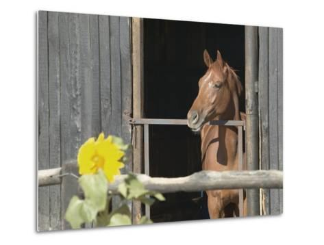 View of a horse in a stable--Metal Print