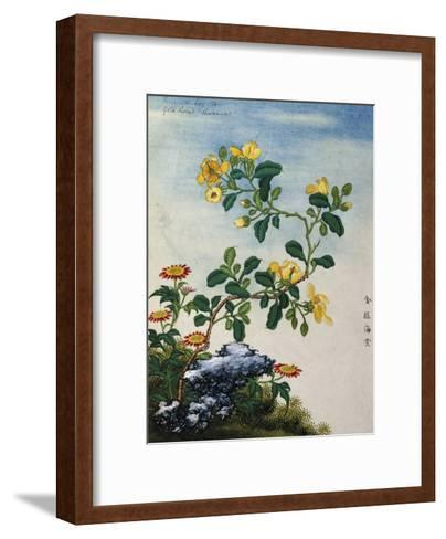 18th-Century Chinese Watercolor of Gold Thread Plant--Framed Art Print