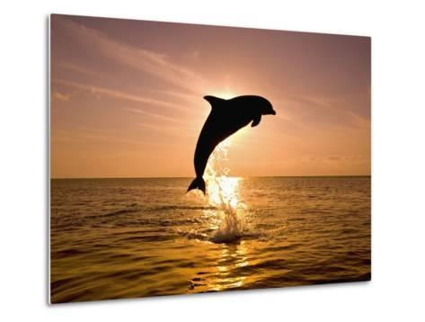 Dolphin Breaching at Sunset-Craig Tuttle-Metal Print