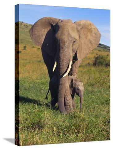 African Elephant with Calf in Grass--Stretched Canvas Print