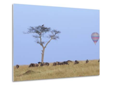 Ballooning Over Wildebeests-Arthur Morris-Metal Print