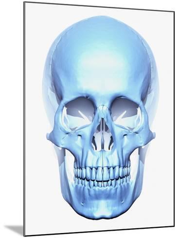 Skull-Matthias Kulka-Mounted Giclee Print