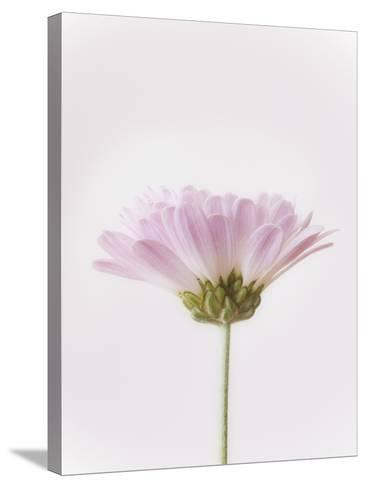 Flowers-Robert Llewellyn-Stretched Canvas Print