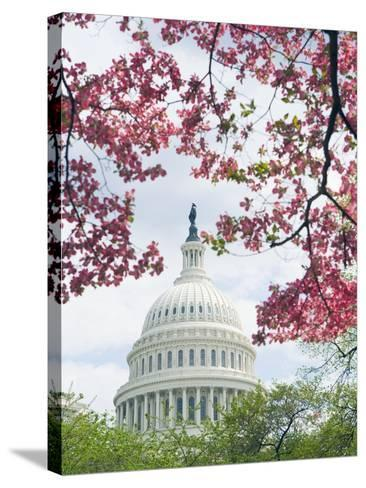 United States Capitol Dome in Washington, D.C. and Flowering Spring Trees-Tim Mcguire-Stretched Canvas Print