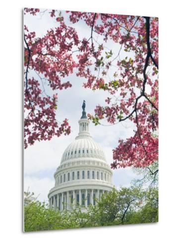 United States Capitol Dome in Washington, D.C. and Flowering Spring Trees-Tim Mcguire-Metal Print