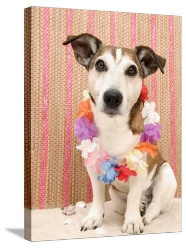 Dog with Lei-Ursula Klawitter-Stretched Canvas Print