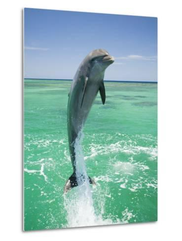 Jumping Bottlenose Dolphin-Stuart Westmorland-Metal Print