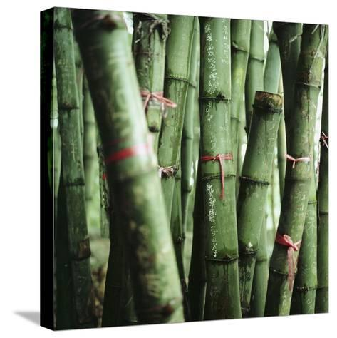 Bamboo Plants-Mika-Stretched Canvas Print