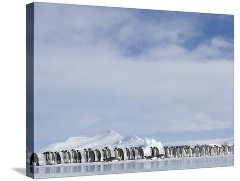 Row of Emperor Penguins in Antarctica-Paul Souders-Stretched Canvas Print